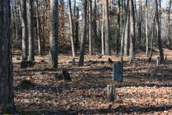 Clemson students will clean up and sketch-map this slave cemetery at Soapstone Baptist Church Saturday.
